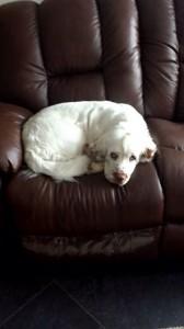 Nian i soffan